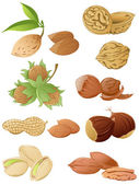 Set of various nuts — Vecteur