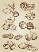 Ensemble de noix diverses — Vecteur