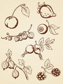 Hand drawn vintage berries — Stock Vector