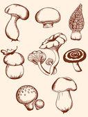 Set of vintage forest mushrooms — Stock Vector