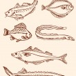 Set of vintage saltwater fish — Stock Vector