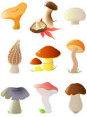Glossy forest mushrooms — Stock Vector