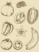 Vintage meyve — Stok Vektör