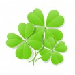 Four leaf clover for saint patrick's day — Stock Vector #8882956