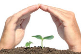 Small plant protected hands — Stock Photo