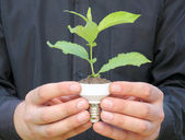 Plant in a base of energy-saving bulb — Stock Photo