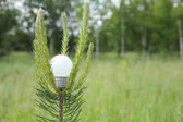 Light bulb on a branch of pine — Stock Photo