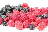 Black and red raspberries — Stock Photo