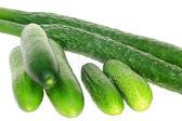 Three sorts of cucumber — Stock Photo