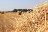 Dry straw texture — Stock Photo