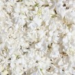 Beautiful frame of white lilac flowers — Stock Photo