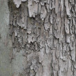 Texture of wood — Foto de stock #6874598