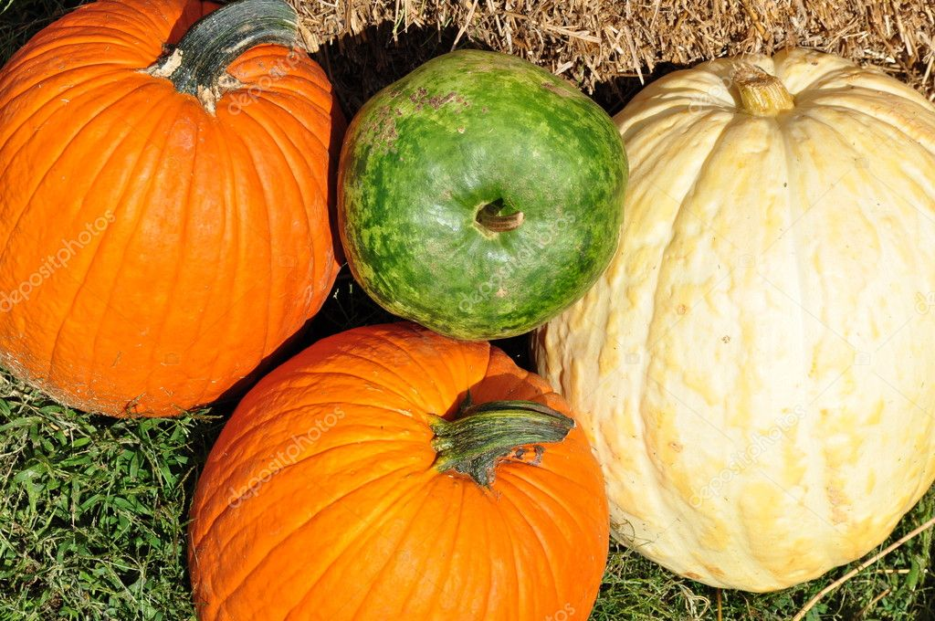 Still life from vegetables.Pumpkins. — Stock Photo #6989551
