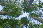 Forest seen from below — Stock Photo