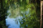 对水的性质反思 — 图库照片