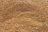 Ear of Wheat — Stock Photo