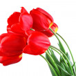 Red tulips — Stock Photo #7693022