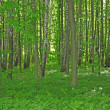 Forest — Stock Photo #7693075