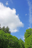 蓝蓝的天空和树木 — 图库照片