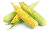 Fresh ear of corn — Stock Photo
