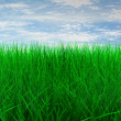 Green color grass — Stock Photo