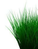 Green color grass isolated on white — Stock Photo