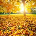 Sunny autumn foliage — Stock Photo #6777558
