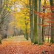 Pathway in the autumn forest — Stockfoto