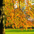 Sunny autumn foliage — Stock Photo #6777973