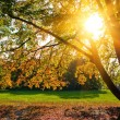 Sunny autumn foliage — Stock Photo #6777991