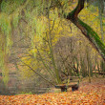 dammen i parken hösten — Stockfoto