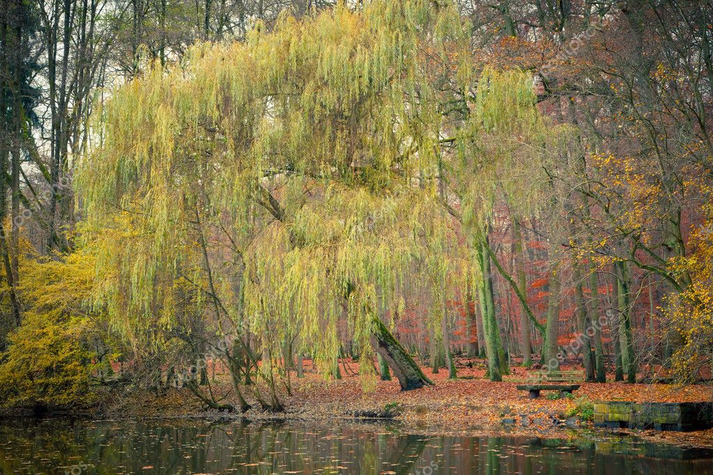 Pond in the autumn park, Germany — Stock Photo #6838906