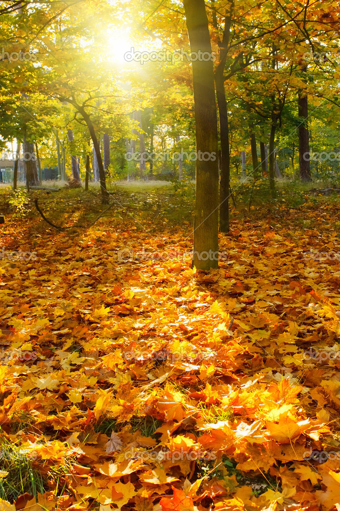 Colorful foliage in the autumn park — Stock Photo #6838921