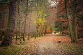 在森林里的秋天 — 图库照片