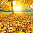 Sunny autumn foliage — Stock Photo #7079187