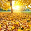 Sunny autumn foliage - Stock Photo