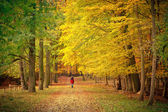 Walking in the autumn park — Stock Photo