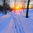 Ski track in countryside at sunset — Stock Photo