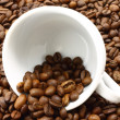 White cup and coffeebeans — Stock Photo