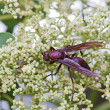 Colorful wasp — Stock Photo #6774622
