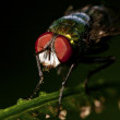 Stock Photo: Colorful Fly