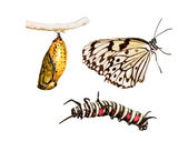 Metamorphosis life cycle — Stock Photo