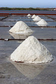 Salt farm — Stock Photo