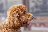 Lindo perrito — Foto de Stock