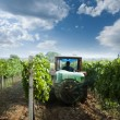 Stock Photo: Tractor spraying vineyards with chemicals