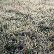 Grass with frost in winter — Stock Photo