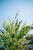 Planta y el cielo — Foto de Stock