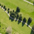 Stock Photo: Row of Trees at Golf Course