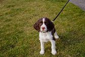 Curious Puppy at the Park — Fotografia Stock