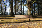 Empty Park Bench at Sunset — Stock Photo